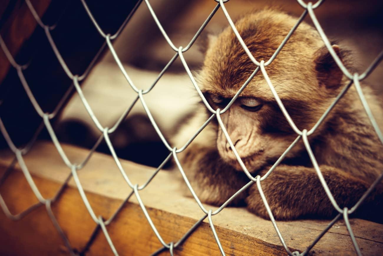 crueldad animal cruelty free